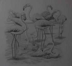 Pencil Drawing Flamingos