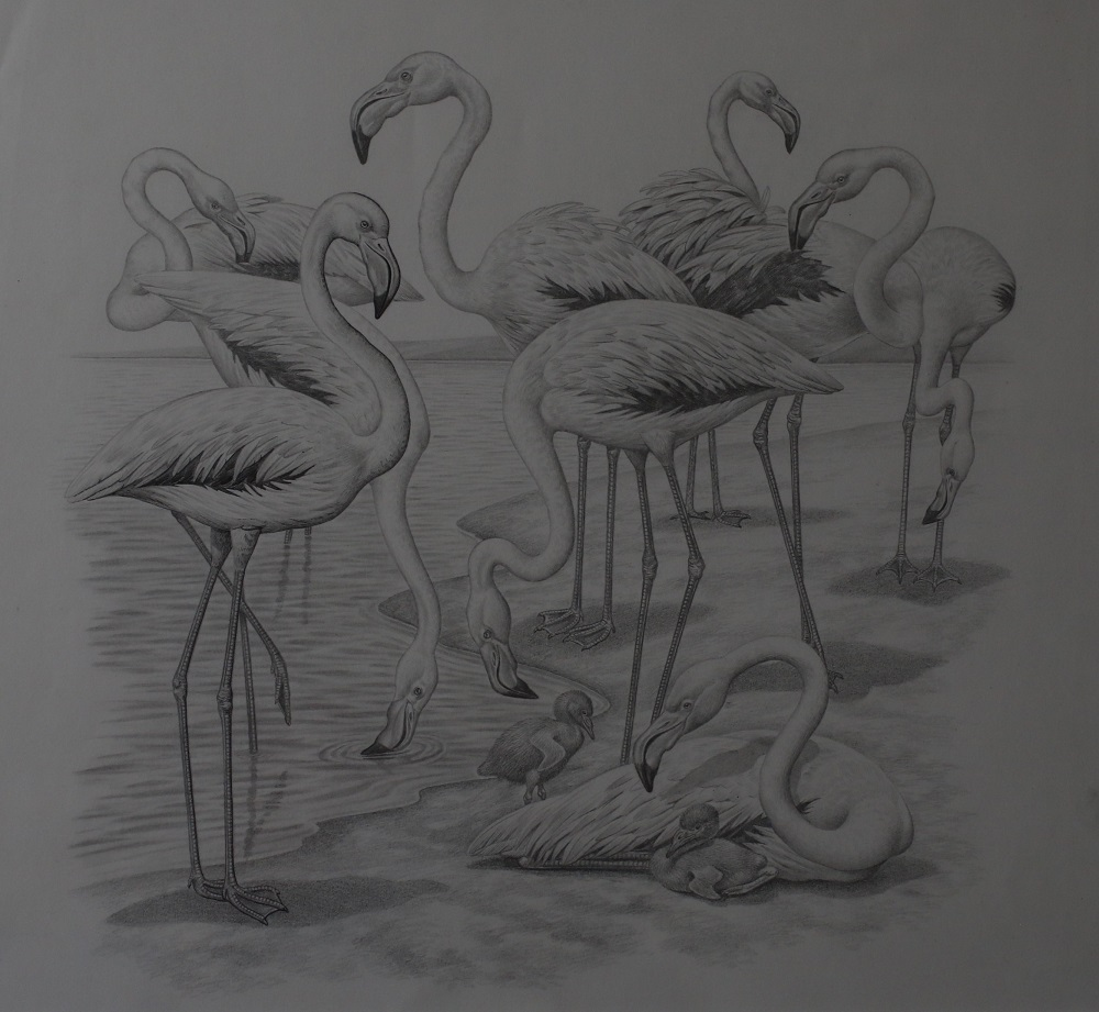 Flamingos - Pencil Drawing