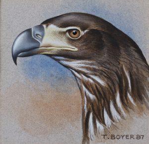 Eagle's Head - T Boyer Artist