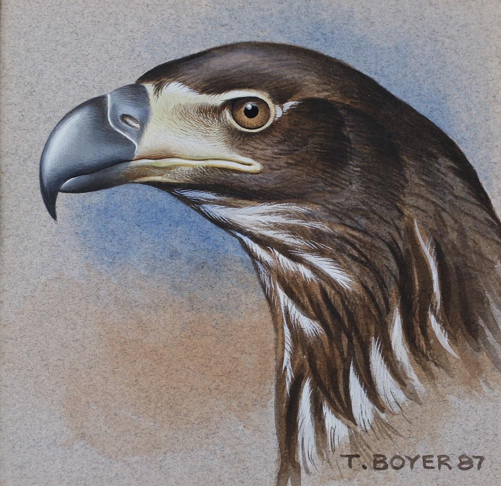 Eagle's Head - Trevor Boyer - Acrylic