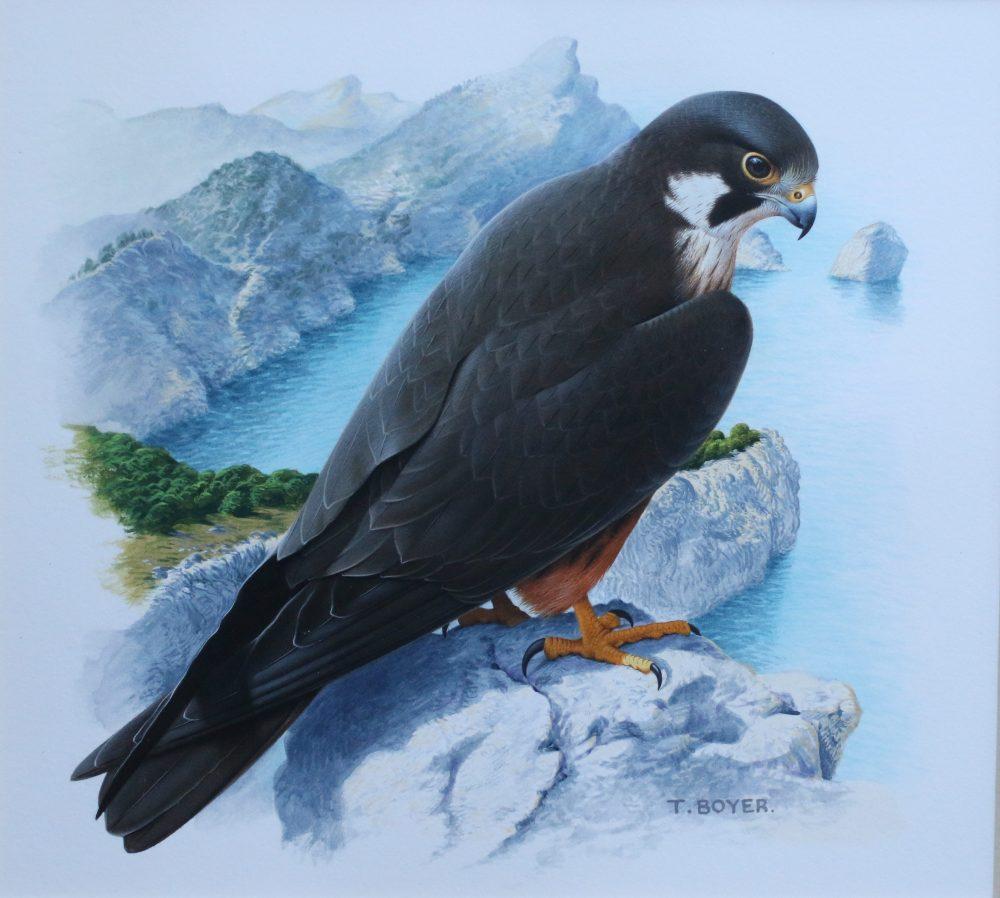 Eleanora's Falcon - Trevor Boyer - Acrylic Painting