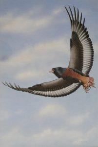 Bateleur Eagle - Trevor Boyer